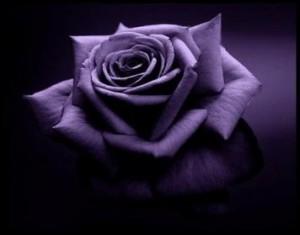 Sorrow  dans Extraits de recueils de poésie de l'auteure rose-parme-300x235