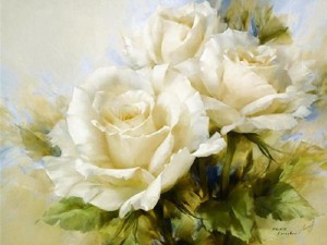 roses blanches senza